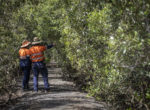 Protected Plants Flora Survey Trigger Areas Mapping Update | CQG Consulting