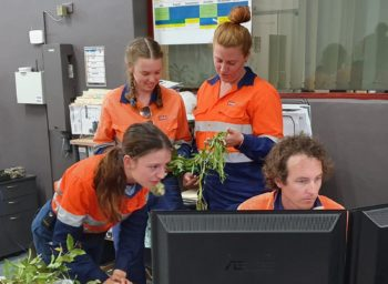 What plant is that? | CQG Consulting