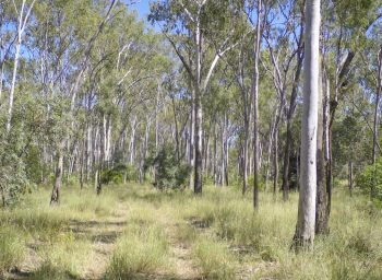 Queensland Vegetation Mapping Updates | CQG Consulting
